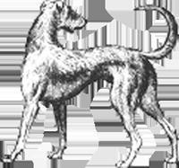 Long_Dog
